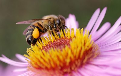 EPC-UK Beekeeper Diary – March