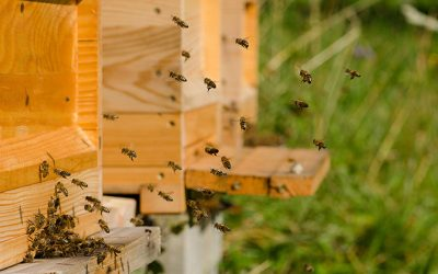 EPC-UK puts pollinator protection plan in place with Plan Bee corporate scheme