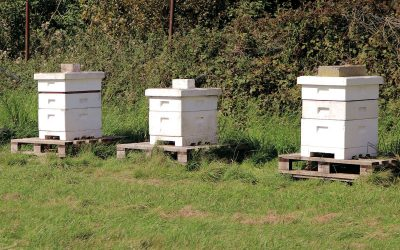 Our Bee Keeper's Diary – August 2019