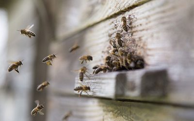 Our Beekeeper's Diary – February 2020