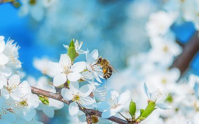 Our Beekeeper's Diary – April 2020