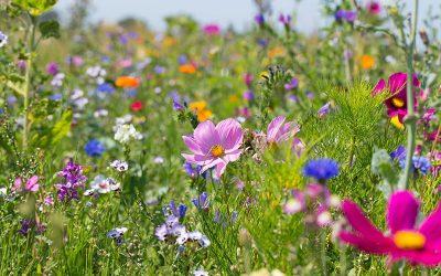 EPC-UK Beekeeper Diary – April