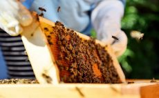 EPC-UK Beekeeper Diary – August