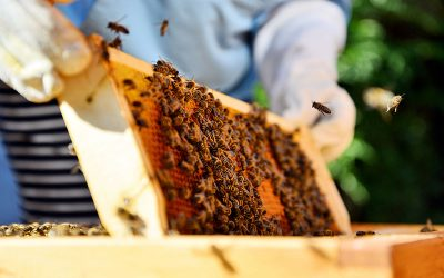 EPC-UK Beekeeper Diary – August