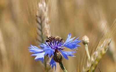 EPC-UK Beekeeper Diary – September