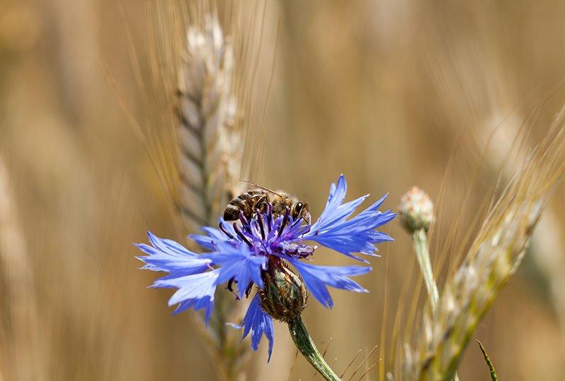 EPC-UK Bees