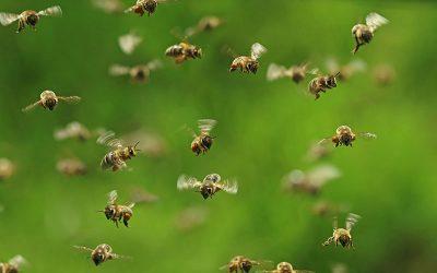 EPC-UK Beekeeper Diary – June